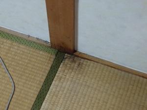 9月後半は畳に生えたカビ掃除に明け暮れる..。そして、結局新畳に交換しました。