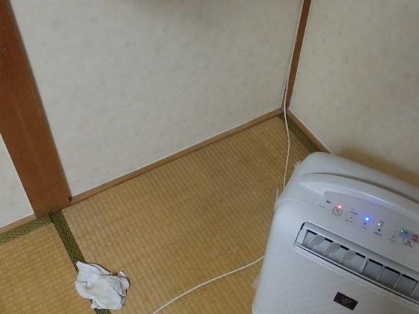 畳のカビ掃除2